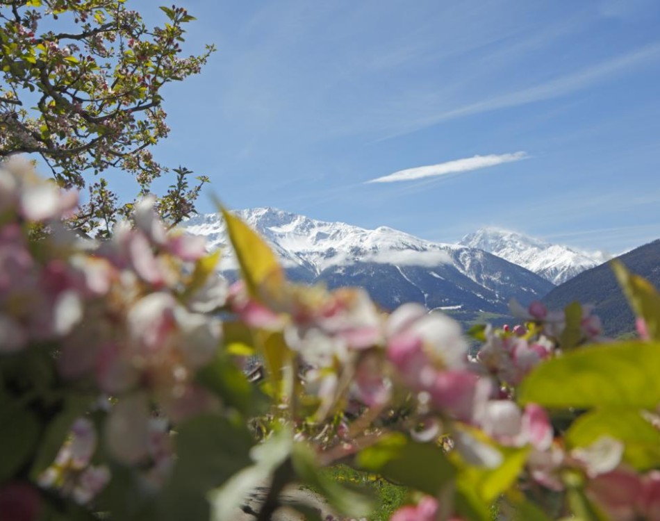 Spectacular view over the Vinschgau Valley